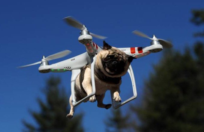 Funny Pictures: Pug dog riding flying drone