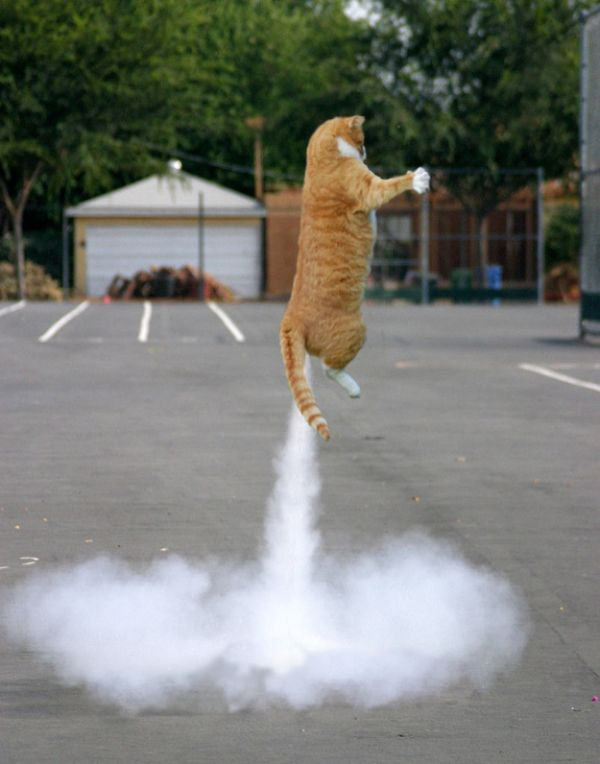 perfectly timed photos ~ cat blasting off like rocket