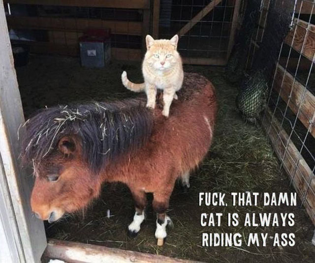 33 Funny Pics~ Cat riding my ass