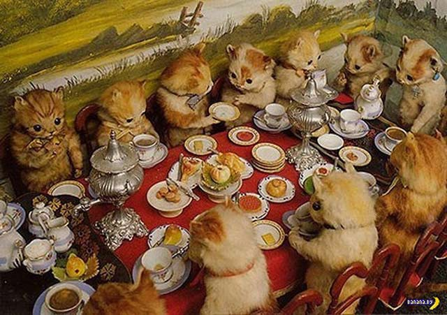 33 Funny Pics of the Day ~ stuffed kittens tea party