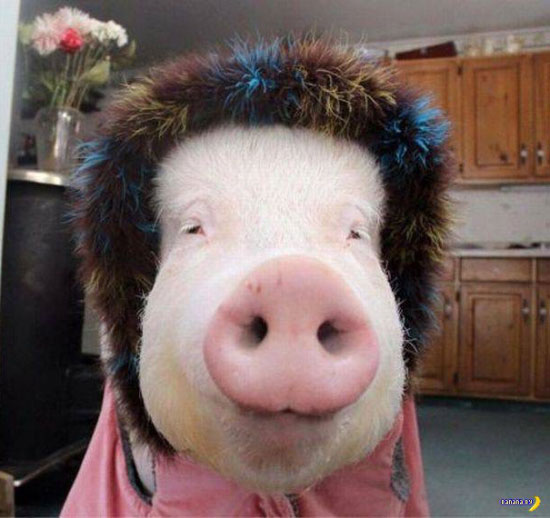 33 Funny Pics of the Day ~ happy pig