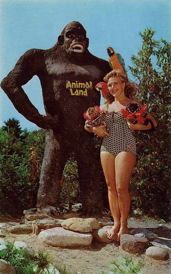 33 Funny Pics of the Day ~ vintage postcard gorilla land