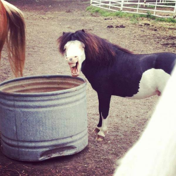 creepy white faced horse