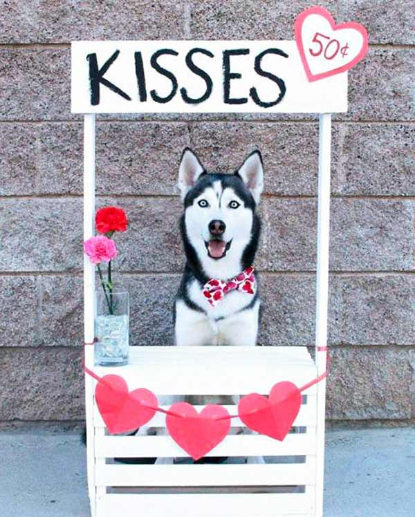 35 Funny Pics ~ dog kissing booth