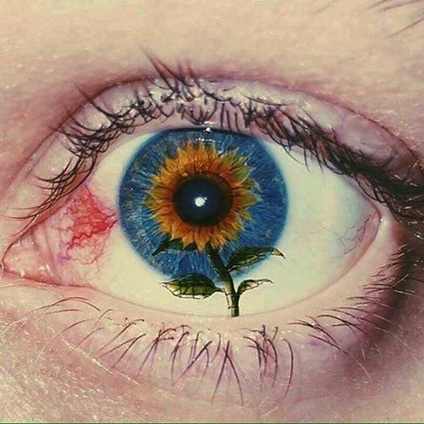 cool pics: sunflower eyeball