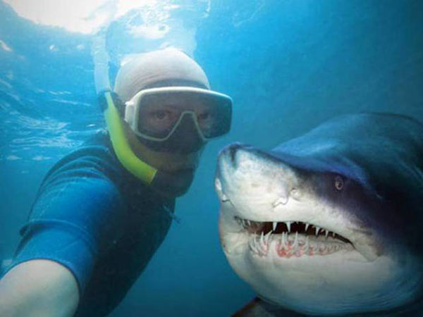 shark posing with diver ~ funny animals that take better pictures than you