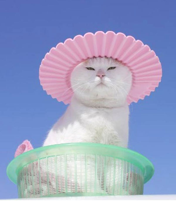 cool cat in hat ~ funny animals that take better pictures than you