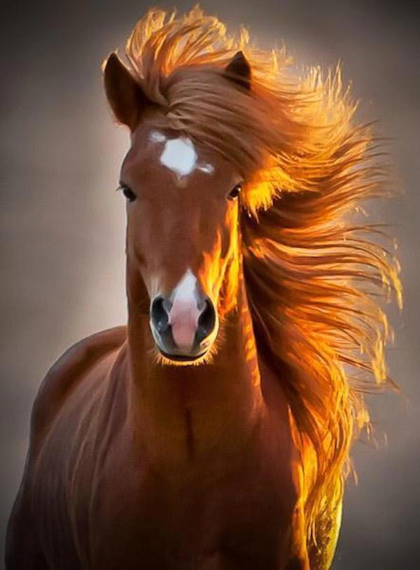 handsome suave horse, flowing mane ~ funny animals that take better pictures than you