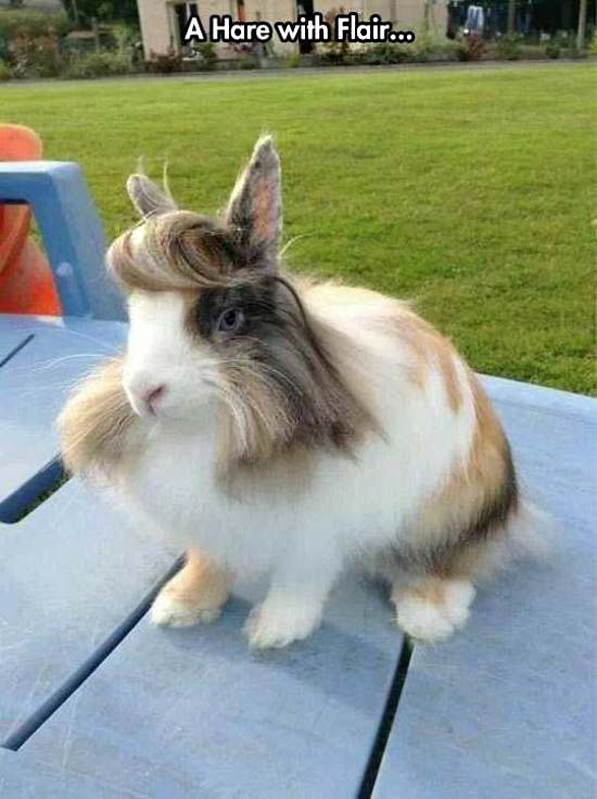 handsome rabbit great hair ~ funny animals that take better pictures than you