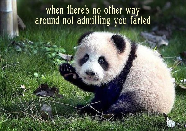 Funny Pics & Memes ~ embarrassed Panda, admitting you farted