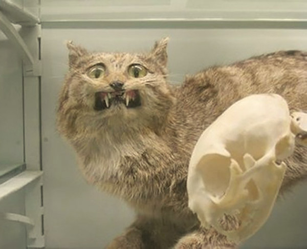 Funny Pics & Memes - bad taxidermy fails, stuffed cat