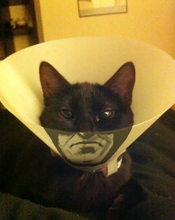 31 Funny Pics & Memes ~ cat with cone, batman