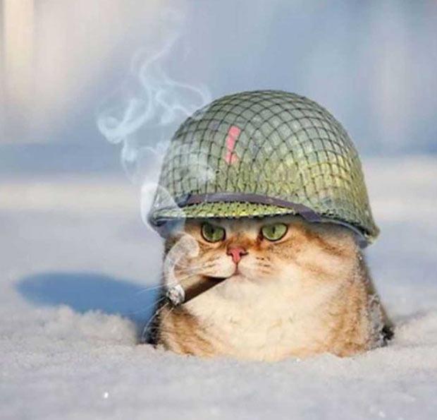 35 Funny Pics ~ funny cat in snow, army helmet cigar