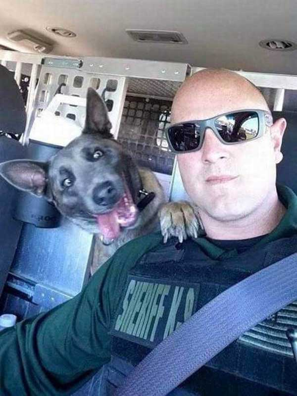 31 Funny Pics & Memes ~ K9 unit dog photobomb