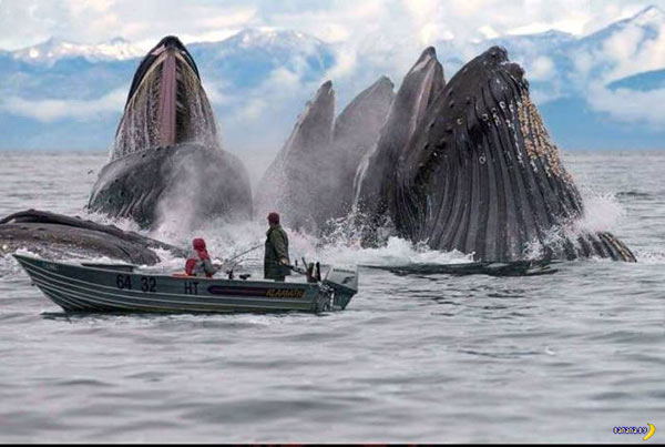 33 Funny Pics ~ whales rising from sea