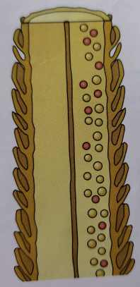 Drawing of hair strand exposing color molecules.