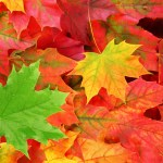 free_fall_leaves_shutterstock_61538884_web
