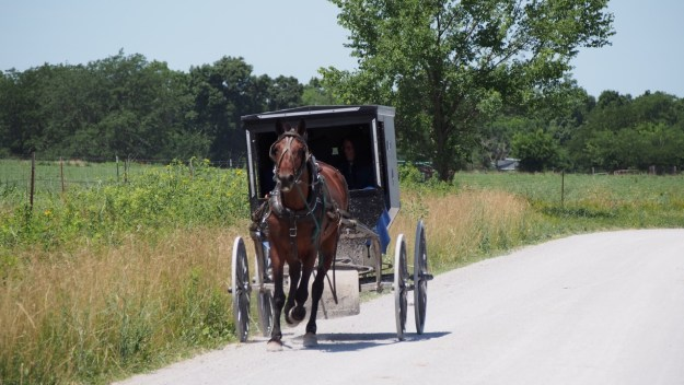 photo of a horse-drawn buggy