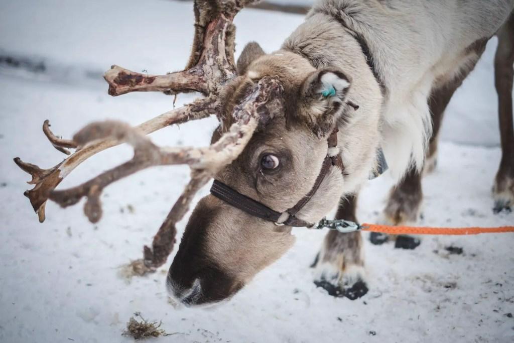 Lapland Finland Underrated Family Travel Destination