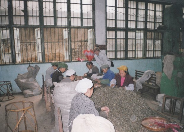 Sorting Room in Chinese Factory.
