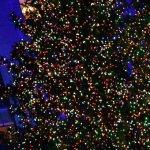 Medio millón de luces navideñas.