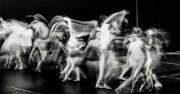 Sai cos'è il Teatro Danza? Scopri questo affascinante modo di fare Teatro!