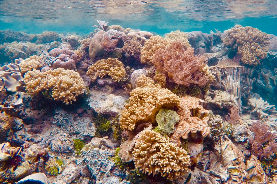 Snorkelling Papua Paradise