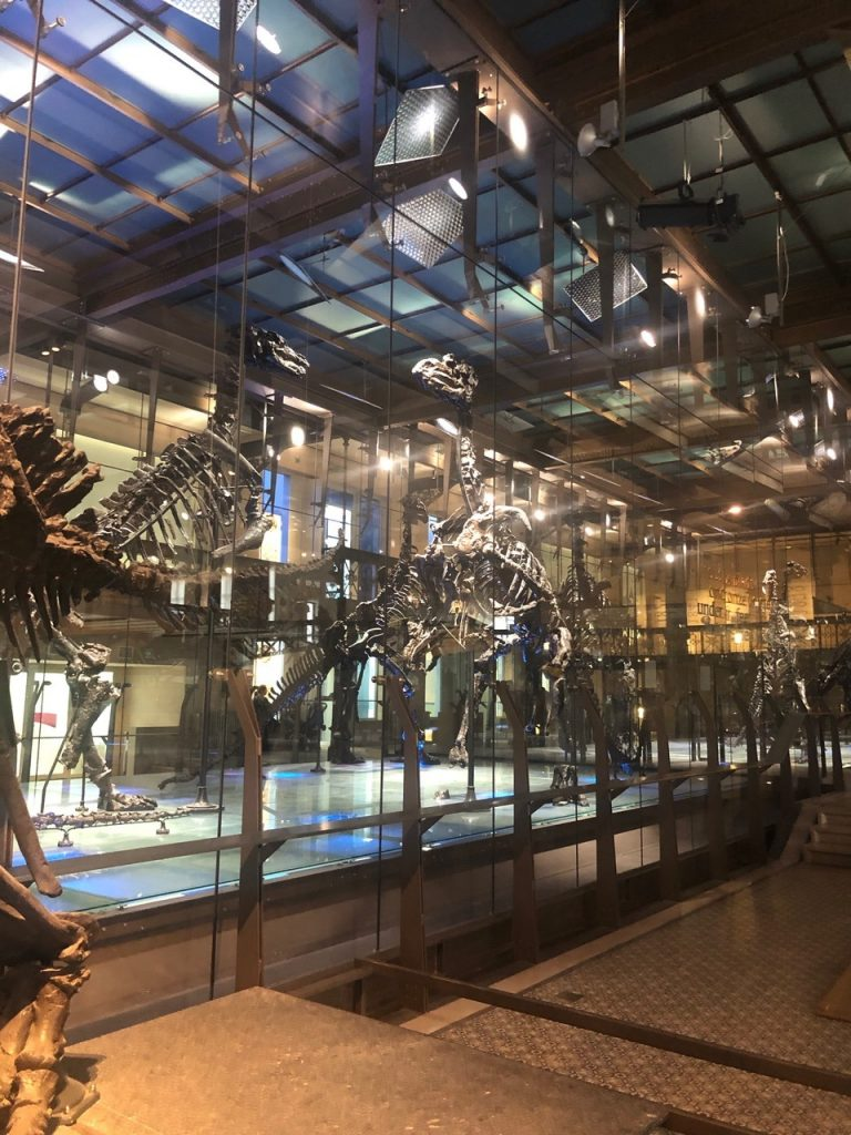 Impressive display of the Bernissart dinosaurs