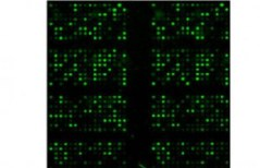 Protein and antibody arrays and services by tebu-bio.