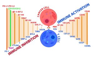 immune inhibition and activation