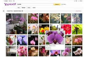 محرك بحث الصور في ياهو