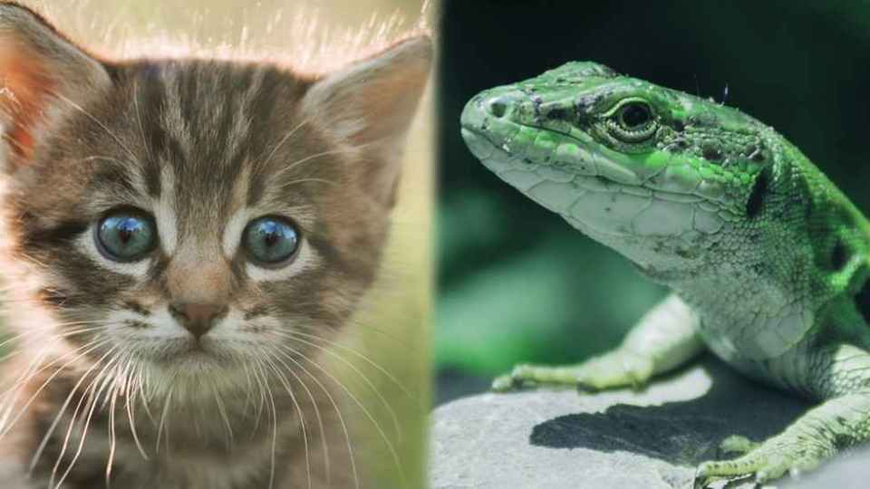 Warm vs cold blooded animals