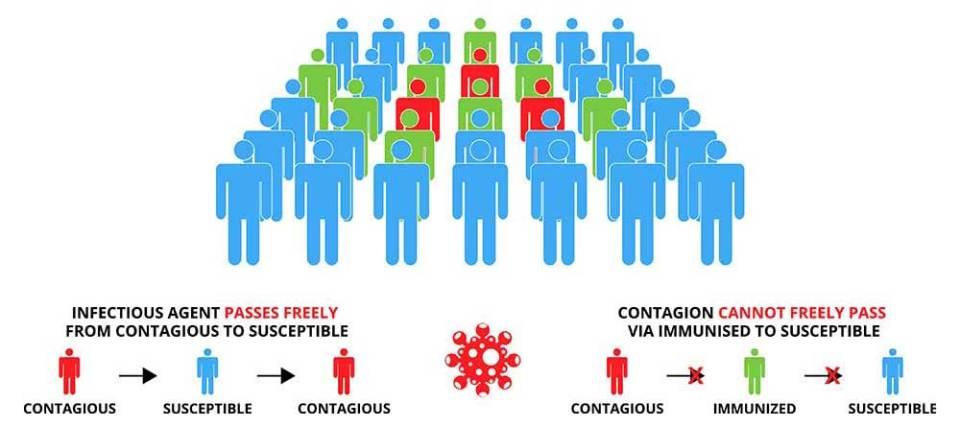 COVID-19 vaccine herd immunity explainer