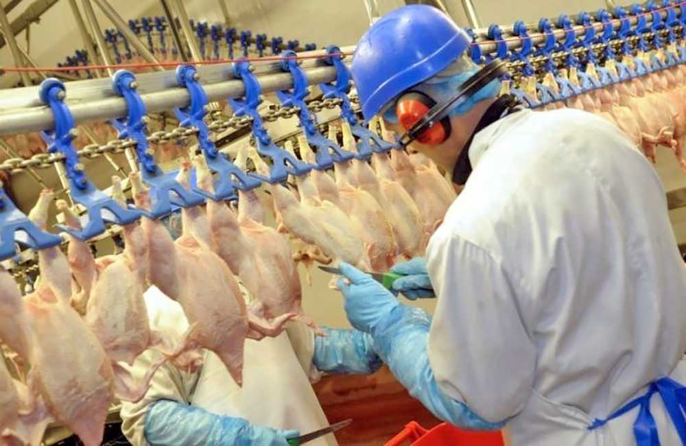 Chicken factory processing