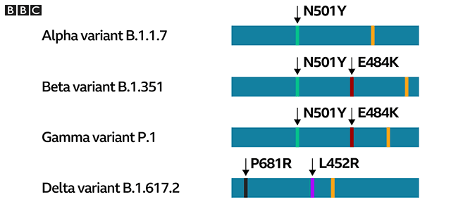 SARS-CoV-2 variant differences