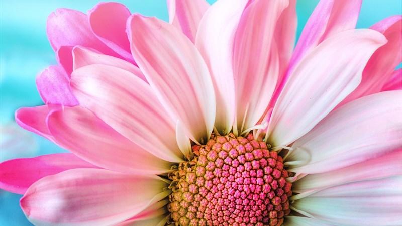 2 flower