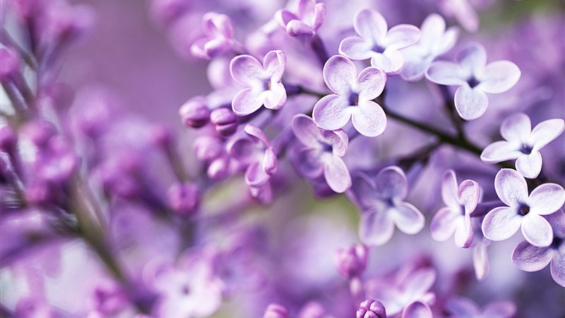 21 spring purple flowers