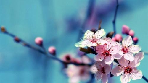 34 flower wallpaper