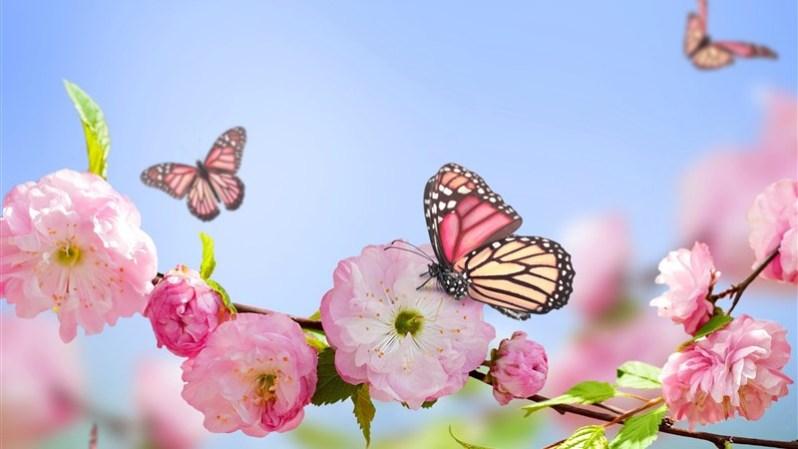 38 Flowers Butterflies Spring Bloom Branch
