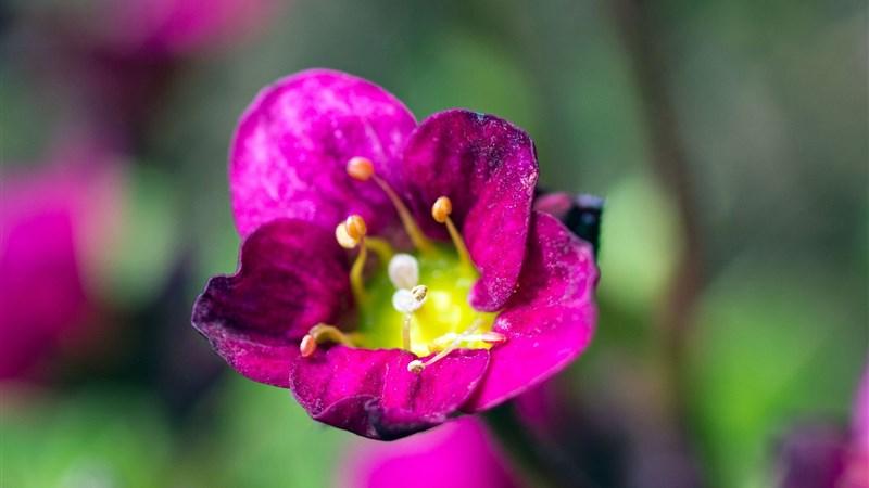 45 flower petals plant