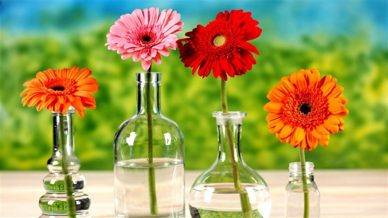 52 Man Made Red Flower Gerbera Vase Colorful Pink Flower Orange Flower