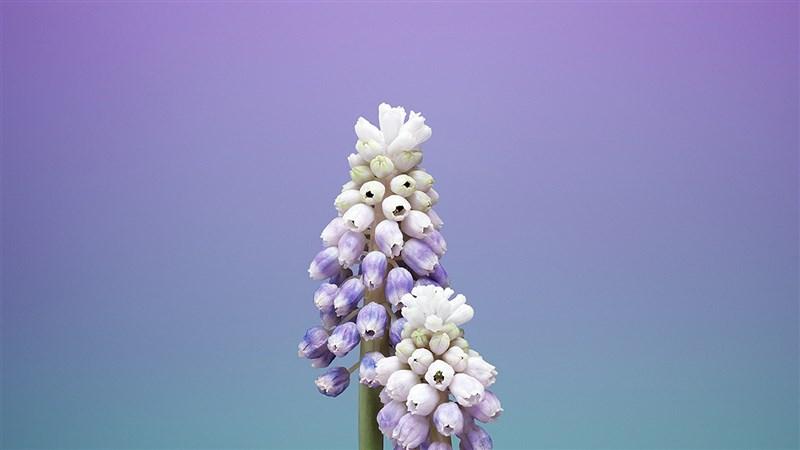 57 illustration art flower wallpaper