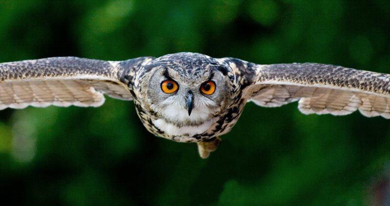 6 owl avian beak