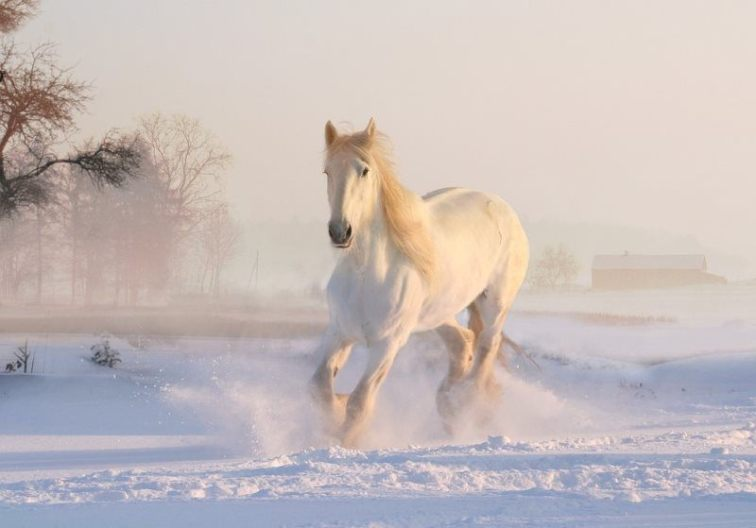 8 christmas winter snow white horse