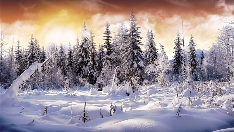 Winter Snow Tree Nature Wallpaper