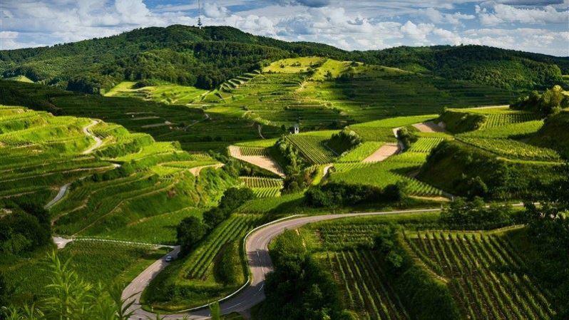 Field Landscape Green View