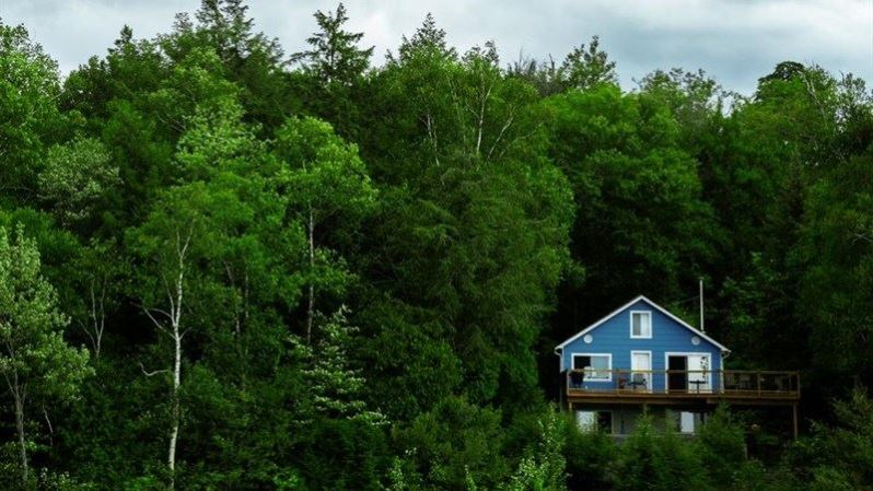 Blue Cottage in Green Forest