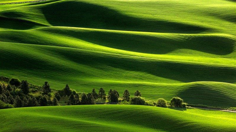 Awesome Field Landscape Background