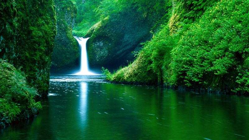 Forest Waterfall View