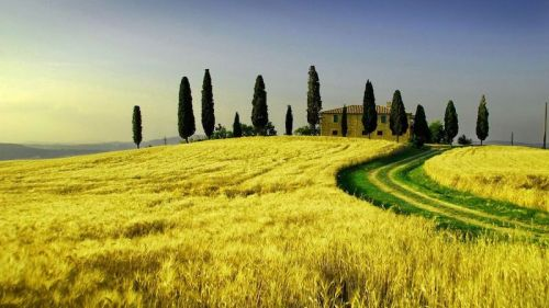 Summer Farm Wheat Tuscany Landscape